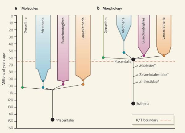 胎生哺乳动物的起源时间与地点
