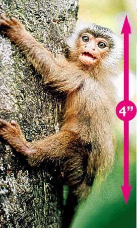 九种世界最小动物:迷你小狗脑袋草莓大小