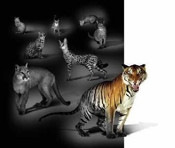 致命的大型猫科动物经由