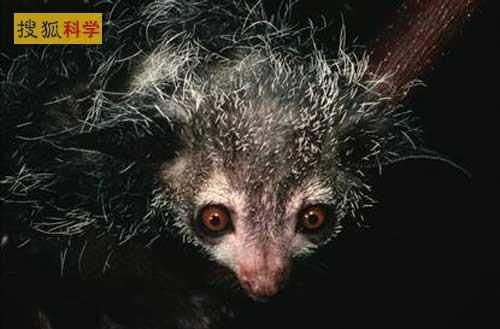 """世界十大最古怪动物:""""混血""""物种引关注"""