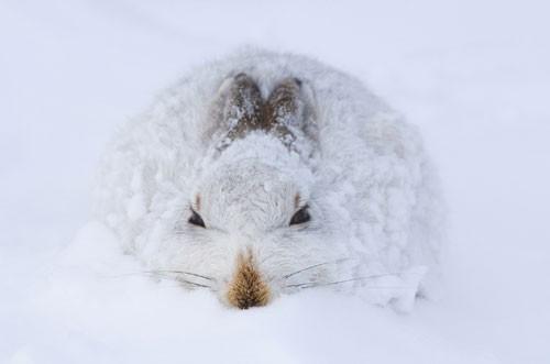 2008年欧洲野生动物摄影大赛获奖名单揭晓