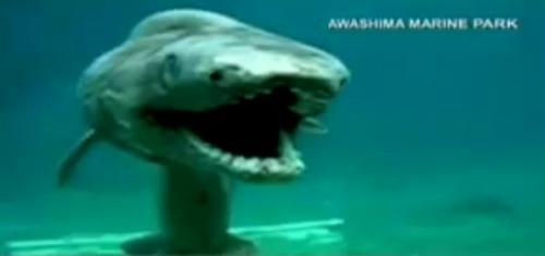 壁纸 动物 鲸鱼 500_235