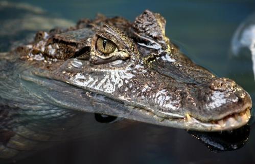 美《连线》杂志盘点12种活化石动物