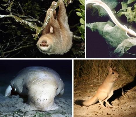 """20种濒临灭绝的奇特物种:""""无毛猿""""半水栖"""