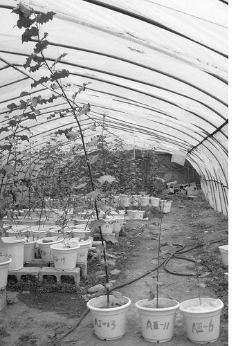 木本植物根的横切面结构示意图
