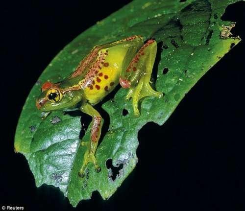 动物学    北京时间5月8日消息,据国外媒体报道,科学家在马达加斯加岛