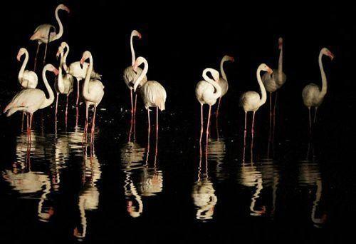 野生动物摄影作品