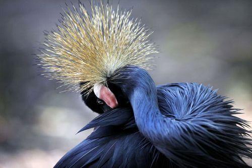 生命经纬 新闻中心 动物学 > 文章正文  在新加坡裕廊飞禽公园育种与