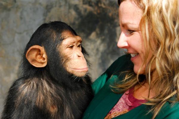 (A baby chimp (Pan troglodytes) and his handler looking at each other. ) 尽管人类和黑猩猩在遗传组成上极其相似,但我们却可以在毫不费力地区别彼此。据一项发表于网络版的《Genome Research》杂志的报道,人之所以以区别于其他灵长类动物,是由于人类基因组中存在某些特殊的基因。 在分子进化领域存在着一种普遍看法,即任何新基因的出现,都是基因组中先前存在的基因经过复制或重新组合进化而来。而这项研究结果肯定了该看法。研究人员发现的三