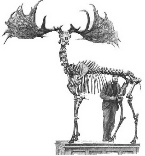 然而这种巨大的动物却在10600年前神秘地灭绝了,个中原因一直是个谜