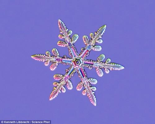 圣诞树装饰物往往依据雪花外形布置