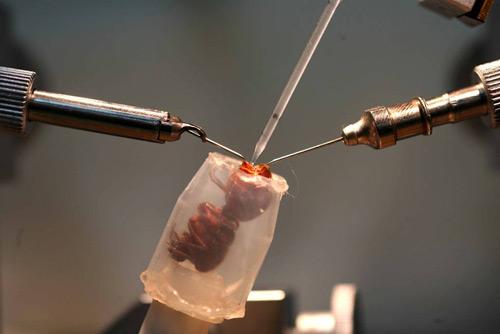 Удивительно, что людям для хранения спермы в течение длительного врем